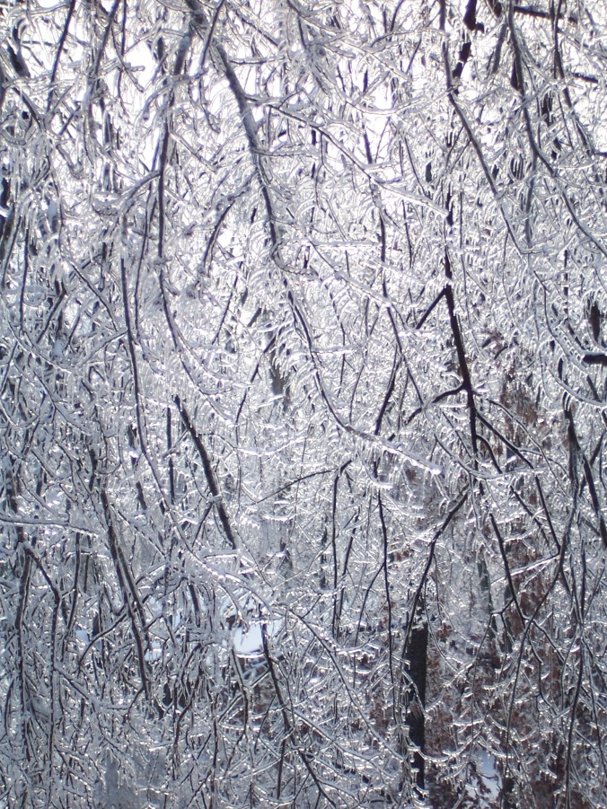 It's a ice jungle out there!